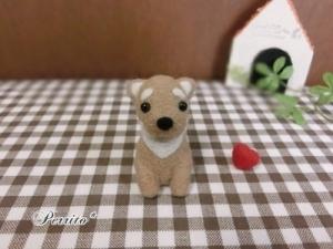 2月柴犬1