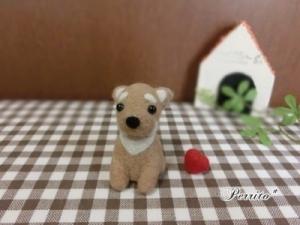 2月柴犬2