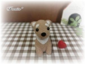 2月柴犬4