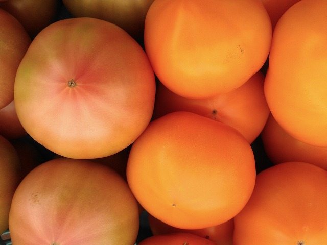 tomatoG001.jpg