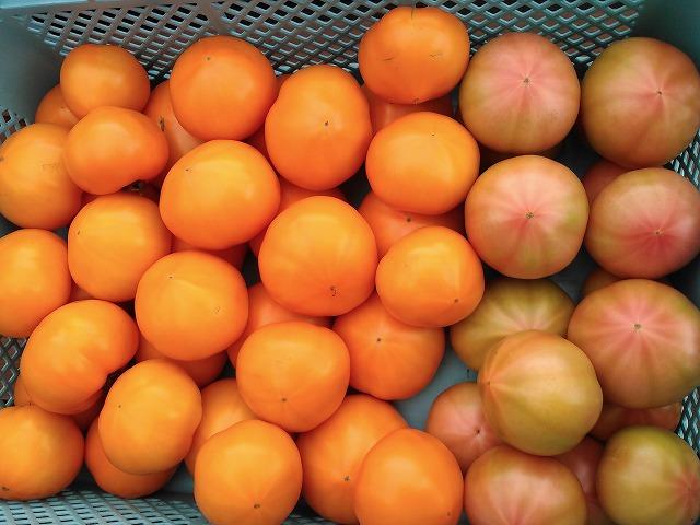 tomatoG002.jpg