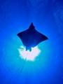 ray3 (600x800)