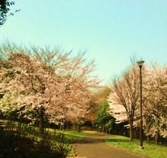 20150330みどりの丘公園1