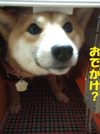 blog8447.jpg