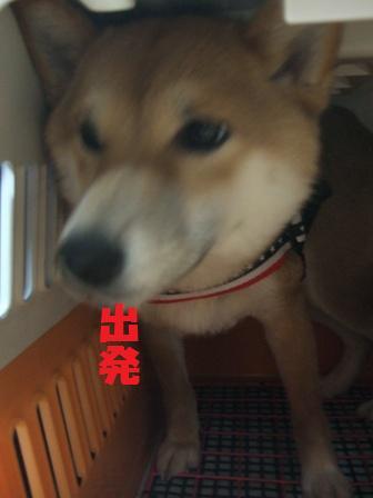 blog8463.jpg