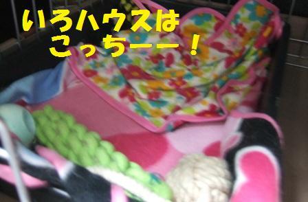 blog8611.jpg