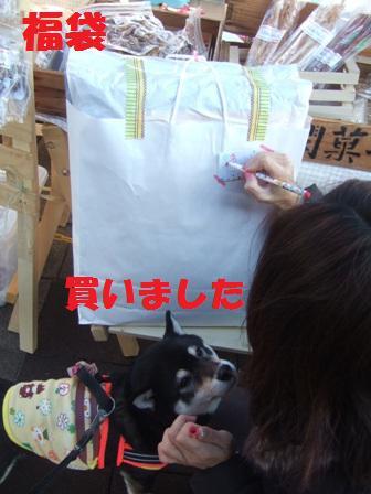 blog8621.jpg