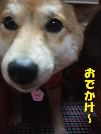 blog8661.jpg