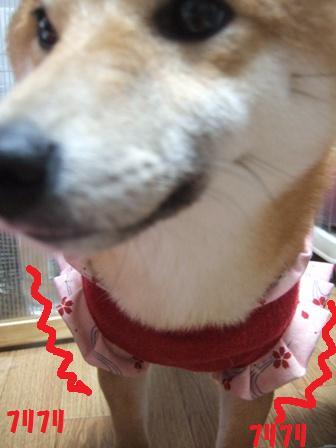 blog8706.jpg