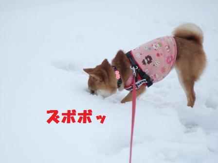 blog8726.jpg