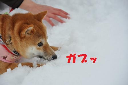 blog8740.jpg