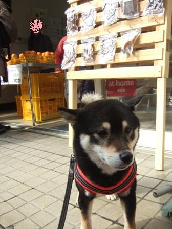 blog8746.jpg