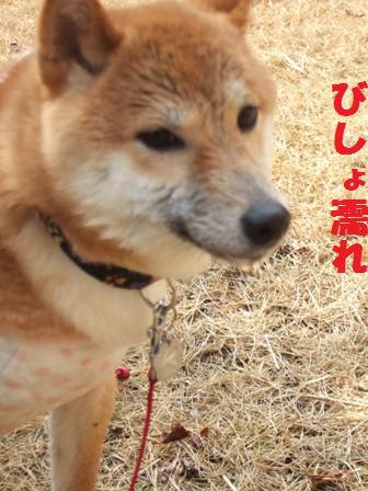 blog8752.jpg