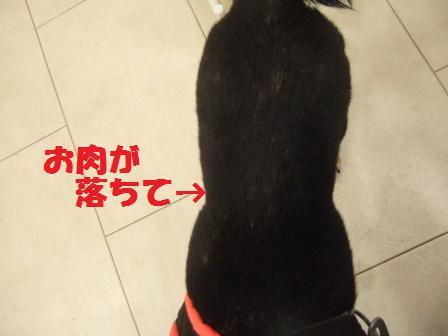 blog8813.jpg