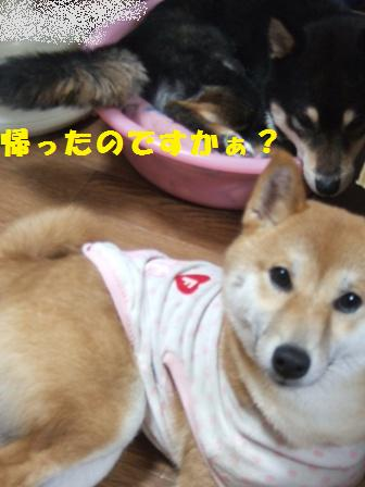 blog8854.jpg