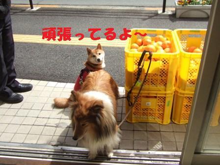 blog8903.jpg