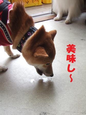 blog8906.jpg