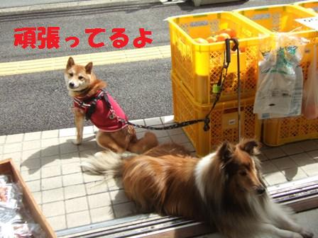 blog8907.jpg