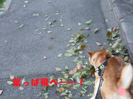 blog8949.jpg