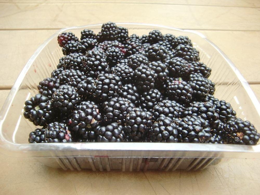 150718blackberry2