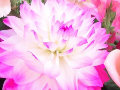 大きな花2