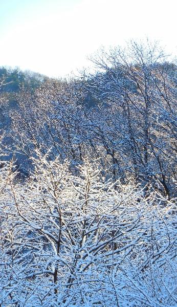 DSCN0365-20150312雪の華
