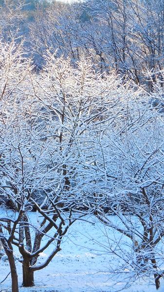 DSCN0366-20150312雪の華
