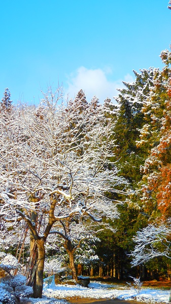 DSCN0373-20150312雪の庭