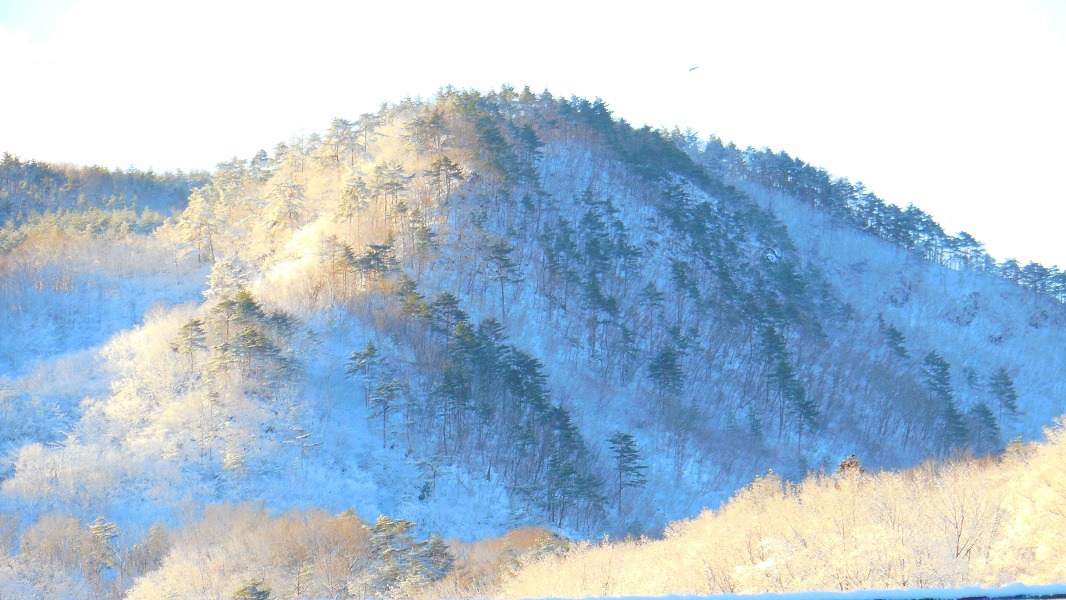 DSCN0672-20150324雪