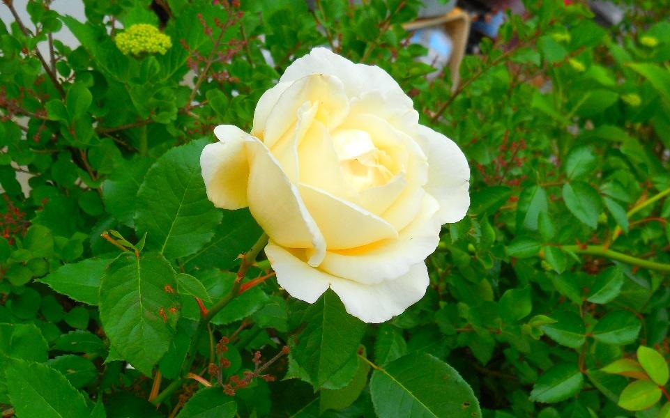 DSCN0349-20150529.jpg