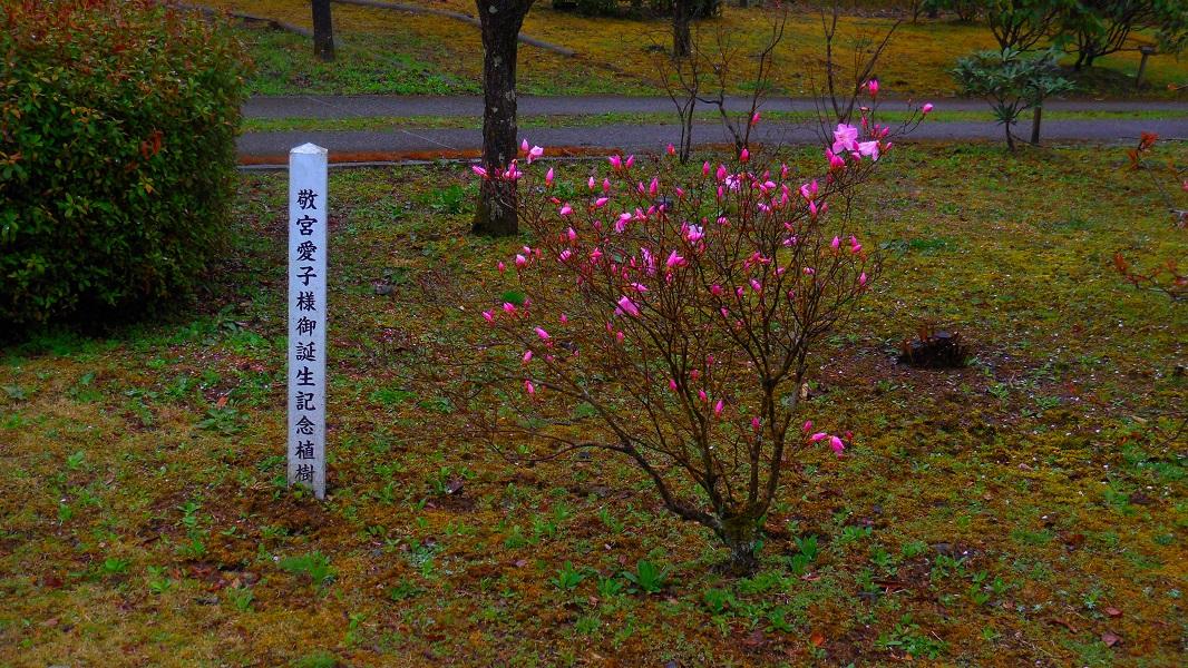 DSCN1371-20150411.jpg