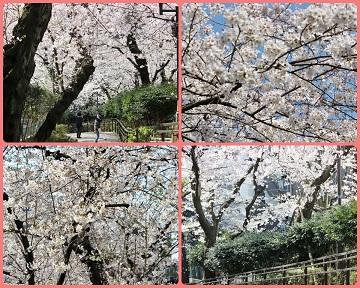 H27033001池田山公園