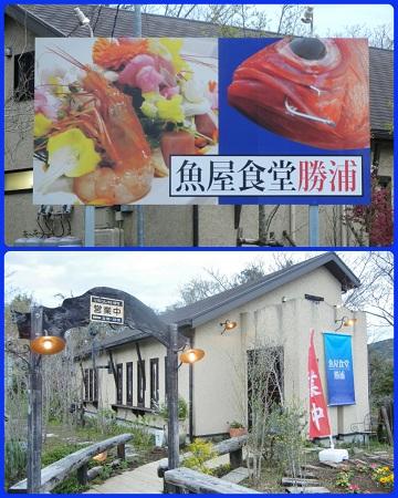 H27041105魚屋食堂勝浦