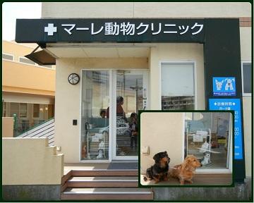 H27041802狂犬病予防注射