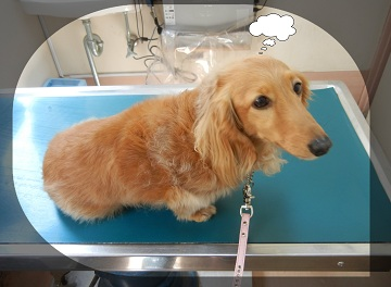 H27041803狂犬病予防注射