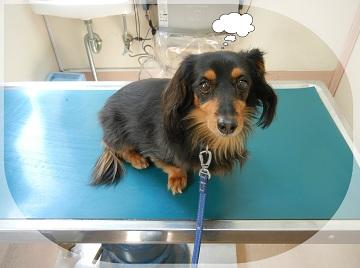 H27041804狂犬病予防注射