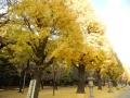 H261213YAZAWA07.jpg