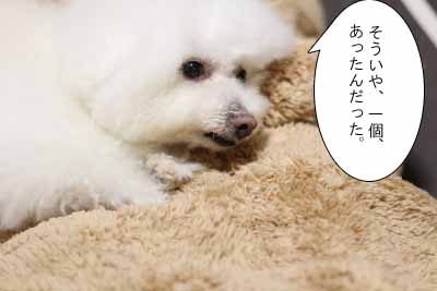 IMG_3834.jpg