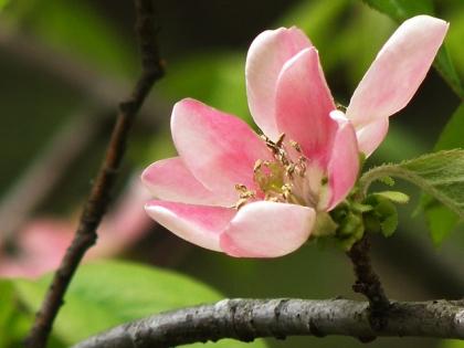 2015春の花1