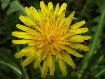 2015春の花2