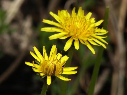 2015春の花3