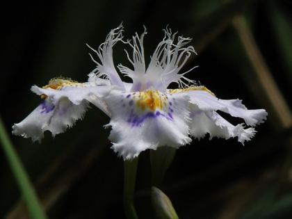 2015春の花4