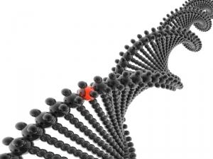 DNA random mutations