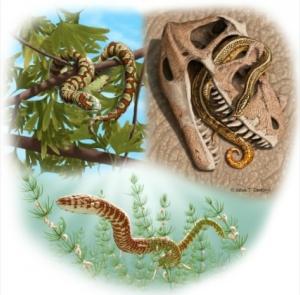Portugalophis lignites and Diablophis gilmorei and Parviraptor estesi