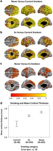 Cortical thickness three smoking categories