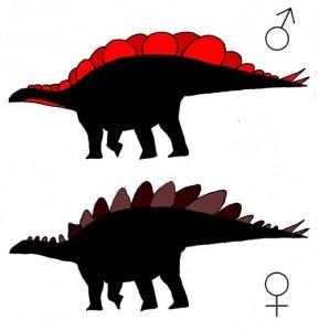 Stegosaurus mjosi Sexual dimorphism