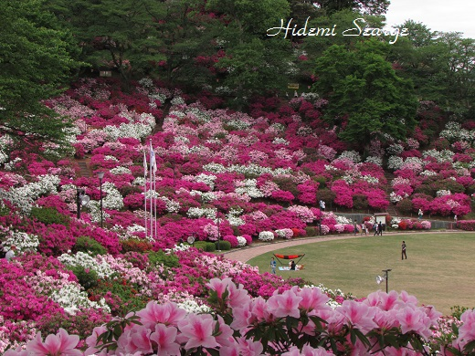 2015年西山公園つつじ祭り5月4日