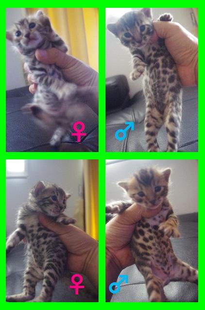 2015春子猫