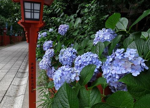 2015-07-02 川越スナップ 001