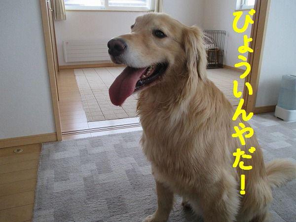 2015-1-5-ハチ-0022